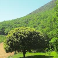 La Naturaleza como maestra y salud